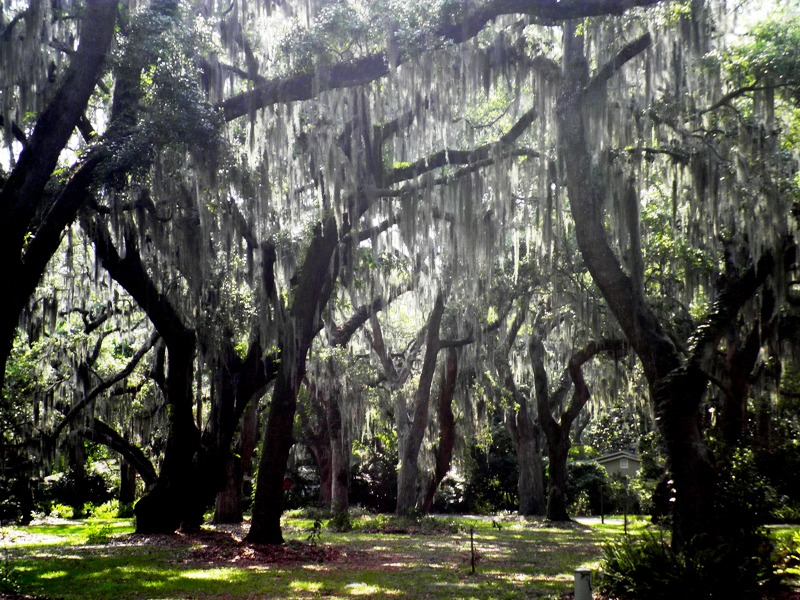 southern gothic The south, then, becomes a repository for forbidden desire and murderous excess in a region known for what flannery o'connor, a southern writer who often combined southern gothic elements.