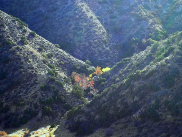 desert fall